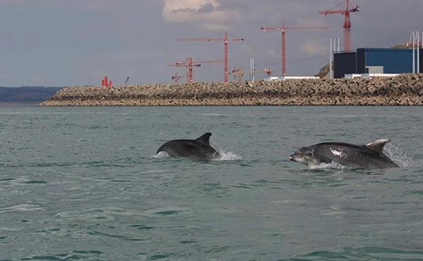 海豚皮肤和体内发现高浓度污染物