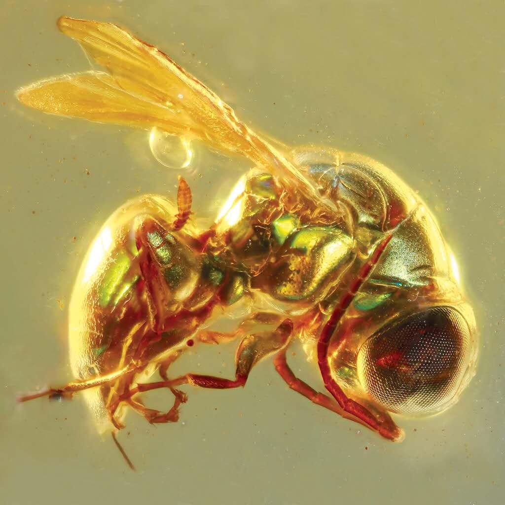 一亿年前的昆虫都是啥颜色?中科